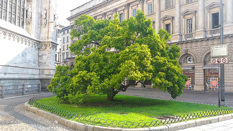 milano strom