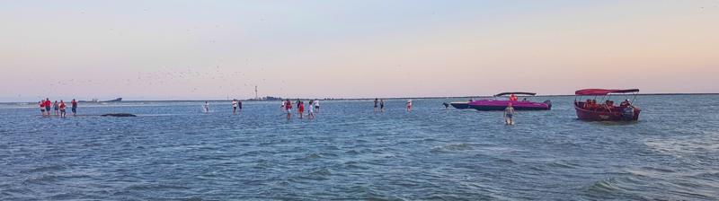 Delta Dunaja