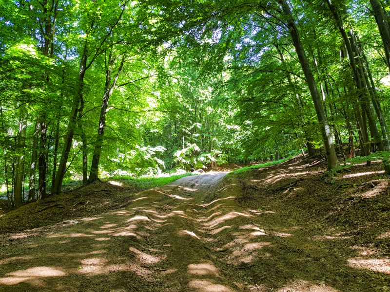 lesna strmina na hrad Pajstun