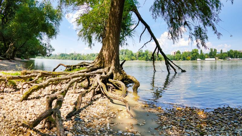 Dunaj v Petrzalke